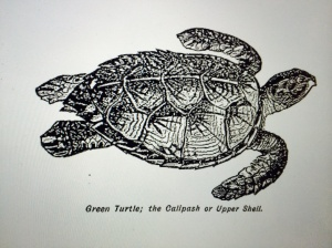 Green Turtle Image