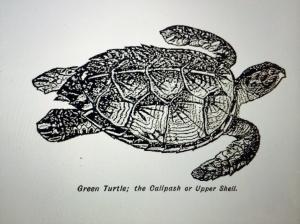 Green Turtle Image